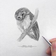 Original one of a kind miniature pencil drawing in square 7 wooden frame. ❇ It comes gift wrapped and ready for giving!❇ This is a unique drawing from my challenge project 50 Shades of Owls - drawing 1 owl each day for 50 days. ✎ 49/50 • Aegolius ridgwayi / The unspotted saw-whet