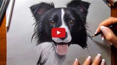 What is it about border collies that make artists want to draw them so much?  Here's another great drawing video featuring an artist showing off a time lapsed painting of a border collie.