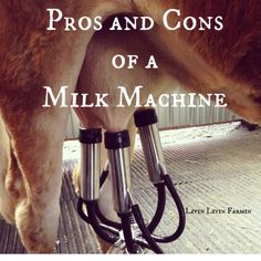Pros and Cons of Milk Machines | Homesteading | Milking cows | Dairy | Raw milk | Livinlovinfarmin.com