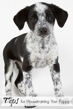 Tips for Housetraining Your Puppy | Tipsaholic.com #pets #training #dogs