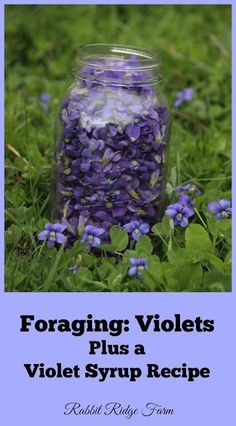 Herbal Medicine Rabbit Ridge Farm: Foraging: Violets Plus a Violet Syrup Recipe Healing Herbs, Medicinal Plants, Healing Prayer, Holistic Healing, Edible Wild Plants, Flower Food, Wild Edibles, Edible Flowers, Along The Way