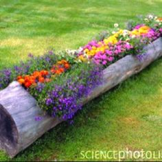 This would make an interesting garden