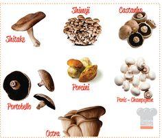 Tipos de Cogumelos