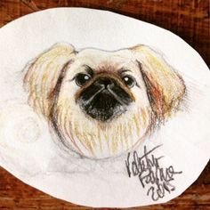 Pekingese - dog art by Valentina Favara