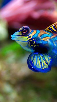 awakyn: Terrazo fish