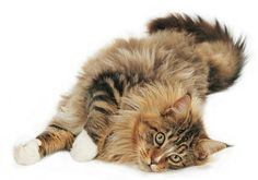 Frisky kitty! <3 this!