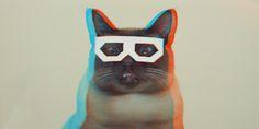 Chat avec des lunettes 3D