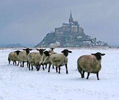 Le Mont Saint Michel sous la neige