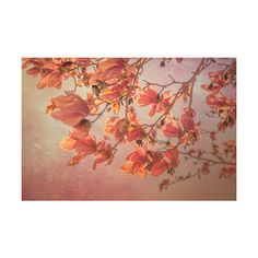 Orange Magnolia blossoms photograph, Orange Spring photography, rustic... ($10) ❤ liked on Polyvore featuring home, home decor, dorataya, orange home accessories, spring home decor, orange home decor, floral home decor and magnolia home decor