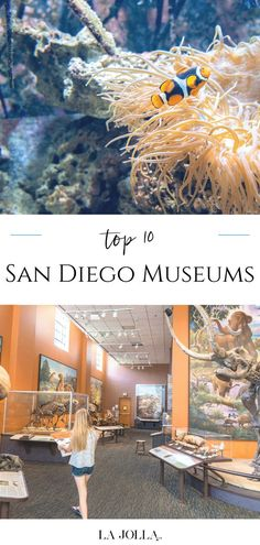San Diego museums cater to artists, archaeologists, surfers, kids, photographers, and a variety of interests. Find an insider's list of the most visited here at La Jolla Mom La Jolla San Diego, San Diego Zoo, Family Vacation Destinations, Travel Destinations, Flying With Kids, Most Visited, Surfers, Beach Fun, Museums