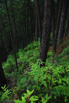 ✯ Cusuco National Park, Honduras