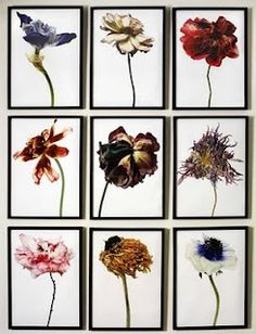 Rachel Lévy WHAT? a collage of different wiltered/ decayed flowers WHY? to show different flowers decaying Natural Form Artists, Natural Forms, Decay Art, Growth And Decay, Art Photography, Flower Photography, Narrative Photography, A Level Art, Tatoo