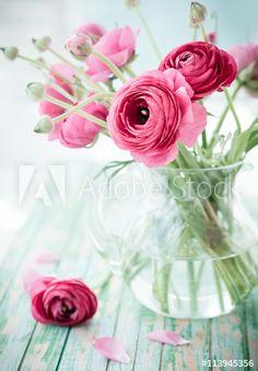 Image of plant, floral - 72108012 - Fresh ranunculus. Bouquet of pink ranunculus in a vase , - Ranunculus Centerpiece, Ranunculus Wedding, Ranunculus Bouquet, Exotic Flowers, Purple Flowers, Beautiful Flowers, Pink Roses, Pink Peonies, Yellow Roses