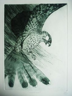 Kestrel by Louise Scott (etching)
