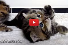 21 Cutest Kitten and Cat Stretching » Love Meow
