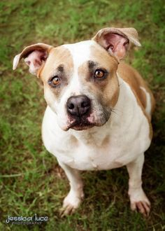 11 Best Adoptable Dogs images in 2015 | Animal Rescue, Pet