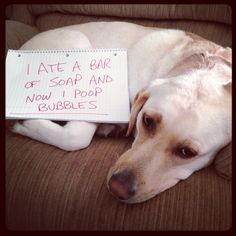 dog-shaming.  Is it bad that I read through these and think, at least my dog is not as bad as these?  Hours of fun.