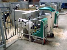 Star Gro Products is offering a wide variety of milk replacers at reasonable prices. We are reliable to our customers for providing the very best milk replacer products in the market.