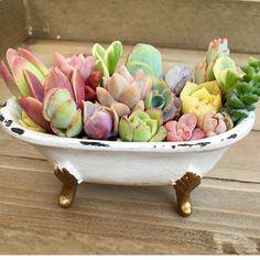#pottery #planters #pots #garden #homeandgarden #flowerpots #decor #landscaping #yardpots #containergarden #gardencontainers