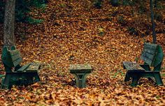 Fall Benches Photograph