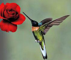 Un colibrí... la dulzura