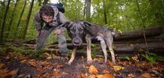 Vom Wolf zum Hund: Der beste Freund des Menschen stammt aus Europa - SPIEGEL ONLINE - Nachrichten - Wissenschaft