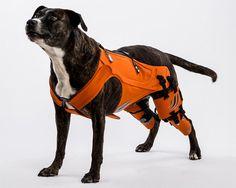 Walkin' Lift Combo Harness - Front & Rear | dog special needs stuff
