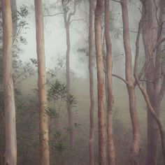Dark forest 2 Dark Forest, Fantasy, Plants, Photos, Painting, Art, Art Background, Pictures, Painting Art