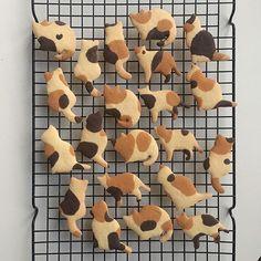 Calico cat cookies - So adorable! Cute Food, Good Food, Yummy Food, Food Porn, Think Food, Cute Desserts, Cute Cookies, Lion Cookies, Sable Cookies