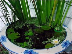 Plants only water garden in a large crock, need advise. - Ponds & Aquatic Pl....  See even more at the image