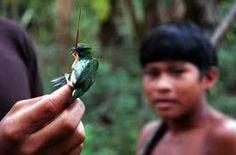 venezuela birds - Google Search