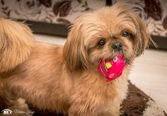 "Misiunea ""Necuvântătorul preferat"" – Concursuri F64 Best Dogs, Beautiful Pictures, Animals, Animales, Animaux, Animal Memes, Animal, Animais, Dieren"
