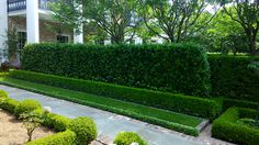 Path around the formal rose garden is made with cut slate flagstone and framed with traditional red brick. Asian jasmine, zoysia grass, boxwood hedges and Japanese yews offer structural lines and depth to this European scaled garden.