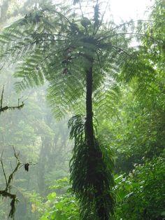 Monteverde Cloud Forest - Costa Rica