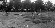 Victory Garden, San Francisco 1943 #VictoryGarden Victory Garden, Golden Gate Park, Victorious, Country Roads, History, Vintage, San Francisco, Lawn And Garden, Historia
