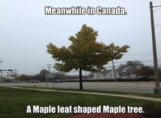 Meanwhile in Canada - Maple leaf shaped maple tree - Memes Comix Funny Pix Canada Jokes, Canada Funny, Canada Eh, Canadian Memes, Canadian Things, Canadian Humour, Canadian Army, Canadian Maple, Les Memes