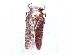 Steampunk Ciccada Antique Brass Ring  by aevalillithjewelry, $39.00