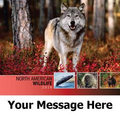 2016 North American Wildlife - Wild Animals - Promotional Calendar Cover. Imprinted with your Business, Organization or Event Name and Logo As Low As 65¢.