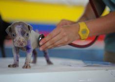 BONDE DA BARDOT: Conheça os principais objetivos da medicina preventiva em cães e gatos