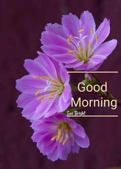 Good Morning Sunday Images, Good Morning Friends Quotes, Good Morning Beautiful Images, Good Morning Cards, Happy Morning, Good Morning Sunshine, Good Morning Picture, Good Morning Flowers, Good Morning Messages