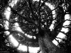 the tree | Flickr - Photo Sharing!