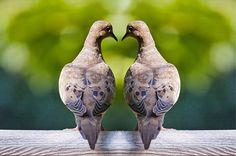Love Dove Birds and the shape of a Heart a by RandyNyhofPhotos