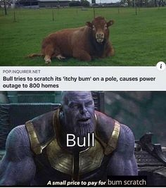 Stupid Funny Memes, Funny Relatable Memes, Haha Funny, Top Funny, Love Memes, Best Memes, Dankest Memes, Fuuny Memes, Animal Memes