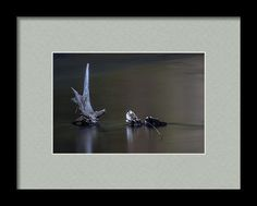 Lake Siskiyou Framed Print featuring the photograph Nature's Sedative by Marnie Patchett