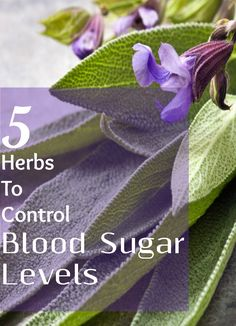 5 Effective Herbs To Control Blood Sugar Levels