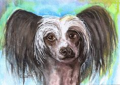 5x7 Painting Chinese Crested Dog Watercolor and Ink Original SFA Penny StewArt #Realism
