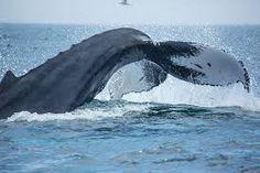 Resultado de imagen para whale