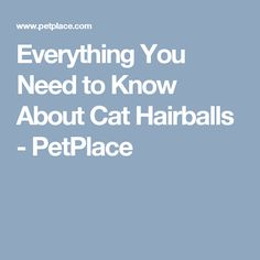 Everything You Need to Know About Cat Hairballs - PetPlace