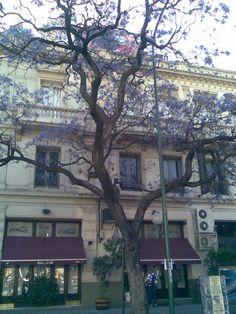 purple tree!!!