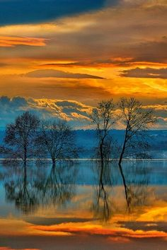 Reflections on water in golden sunset.Tree Reflections on water in golden sunset. Beautiful Sunset, Beautiful World, Beautiful Images, Beautiful Paintings, Beautiful Landscapes, Nature Paintings, Landscape Paintings, Landscape Photography, Nature Photography